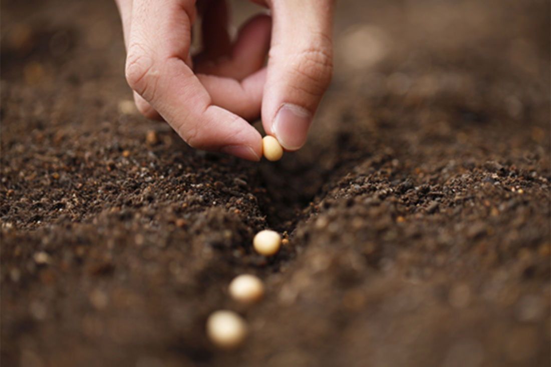 הזרעת זרעים באדמה